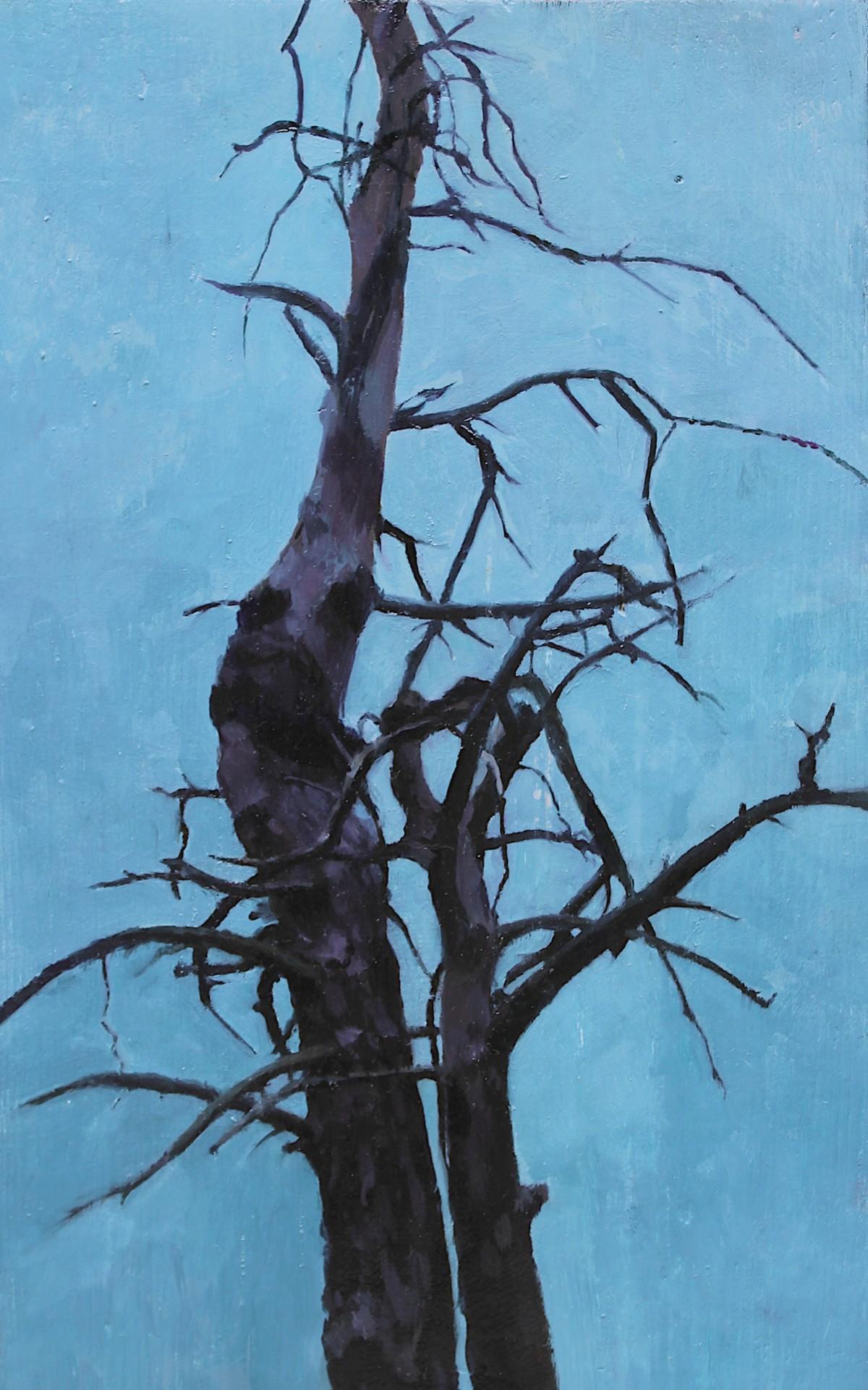 Drzewne osobliwości IV
